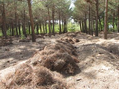 برگ هاي درختان در پارك چغولگير بسطام جمع آوري شد